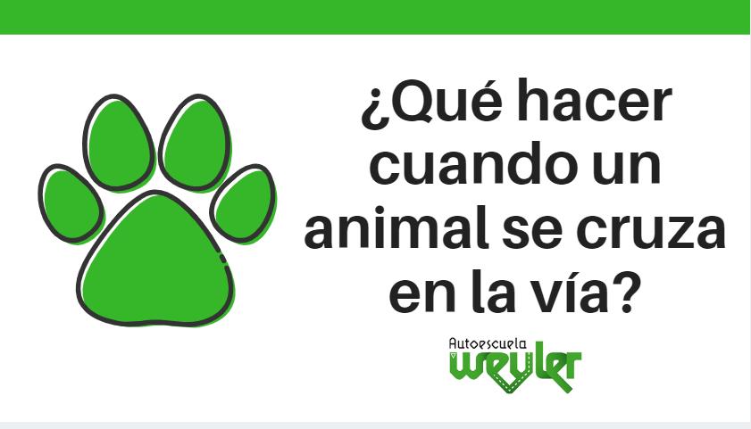 ¿Qué hacer cuando un animal se cruza en la vía?